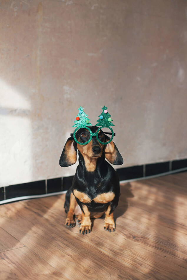 Dackel mit Weihnachtsbrille - freut sich aufs Event Catering zu Weihnachten