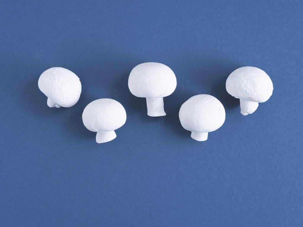 Fünf weiße Champignons vor dunkelblauem Hintergrund